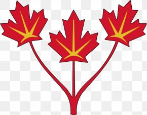 Images Of Maple Leaves - Flag Of Canada United States Maple Leaf PNG