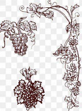 Hand-painted Grapes - Common Grape Vine Wine PNG