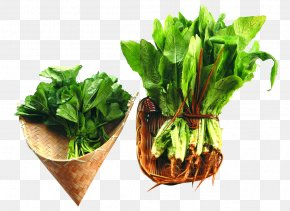 Seasonal Vegetables - Chard Spring Greens Herb Food PNG