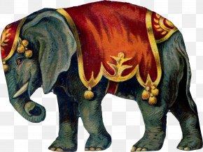 Circus - Circus Elephant Clip Art PNG