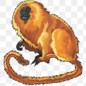 Lion - Golden Lion Tamarin Tiger Felidae Clip Art PNG