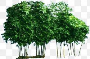 Bamboo Garden - Bamboo Garden Bambusa Vulgaris PNG
