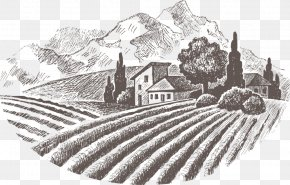 Wine - Common Grape Vine Wine Drawing Royalty-free PNG