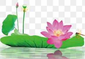 Lotus Material - Download Information Computer File PNG