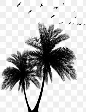 Palms And Flock Silhouette Clip Art Image - Sunset Arecaceae Euclidean Vector Silhouette PNG