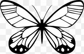 butterfly drawing traveling butterflies coloring book png favpng 3RYKfPJYQHt5dYHNGyfb52eiy t