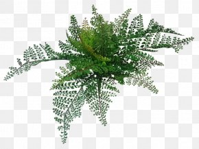 Wood - Fern Wood 適材適所 Artificial Flower Silk PNG
