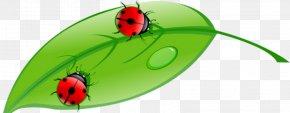 Ladybug - Stock Illustration Royalty-free Illustration PNG