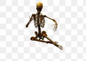 Skull - Human Skeleton Bone U9ab7u9ac5 PNG