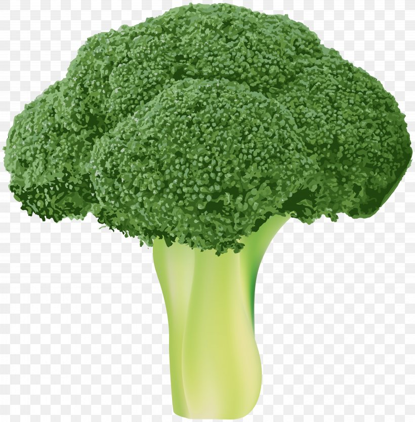 Broccoli Vegetable Wallpaper, PNG, 5897x6000px, Broccoli, Bitmap, Cabbage, Fruit, Grass Download Free
