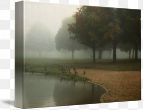 Tree - Water Resources Stock Photography Picture Frames Tree PNG