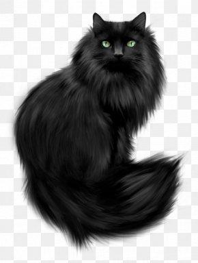 Black Cat - Norwegian Forest Cat Persian Cat Kitten Feral Cat PNG