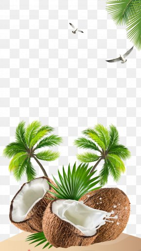Fresh Coconut - Kefir Coconut Water Coconut Milk PNG