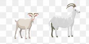 Goat - Sheep Goat Cattle Illustration PNG