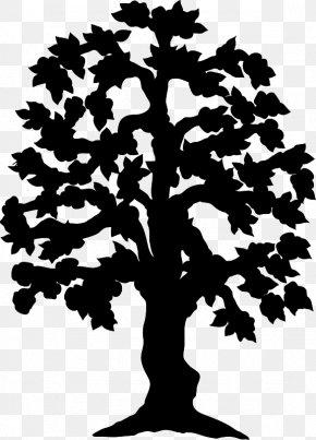 Leaf Pine Plant Stem Font Silhouette PNG