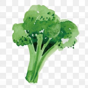 Healthy Broccoli - Broccoli Vegetable Food PNG