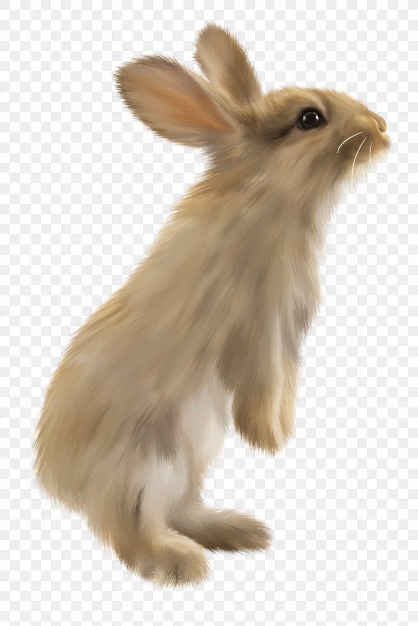 Domestic Rabbit Hare Lionhead Rabbit Volcano Rabbit, PNG, 2049x3072px, Domestic Rabbit, Animal, Drawing, European Rabbit, Fauna Download Free