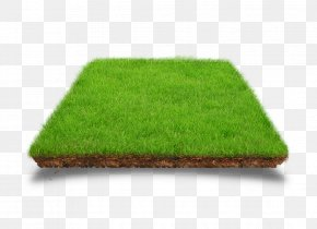 Model - Lawn Artificial Turf Download PNG
