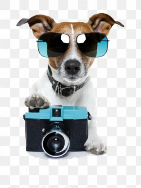 Dog Camera Free To Pull - Jack Russell Terrier Pet Sitting Stock Photography Photographer PNG