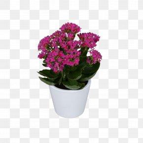 Violet - Vervain Flowerpot Pink Violet Cut Flowers PNG