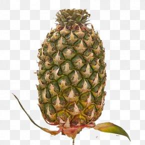 Fruit Pineapple - Pineapple United Kingdom Vans Shoe Surfdome PNG