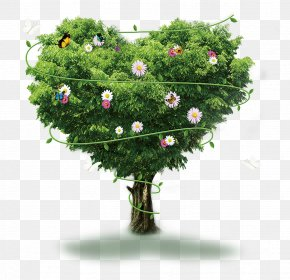The Giving Tree - Tree Google Images Poster PNG