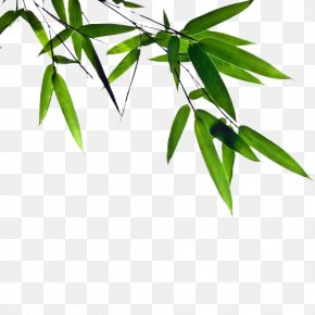 Green Bamboo FIG. - Bamboo Charcoal Mask Cleanser Facial PNG