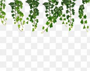 Ivy Hanging Vines - Vine Ivy Clip Art PNG