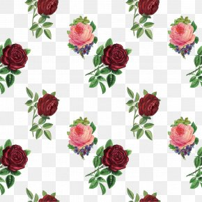 Vintage Rose - Garden Roses Flower Photography PNG
