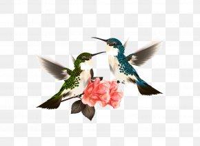 Flowers - Hummingbird Flower Illustration PNG