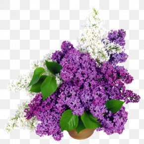 Flower - Common Lilac Flower Bouquet Cut Flowers PNG
