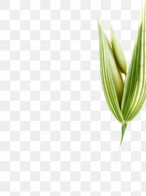 Leaf - Leaf Grasses Plant Stem Commodity Flower PNG