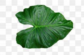 Leaf Pic - Leaf Clip Art PNG