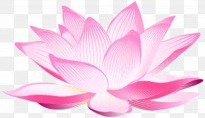 Lotus Flower Clip Art Image - Nelumbo Nucifera Pink Petal Wallpaper PNG