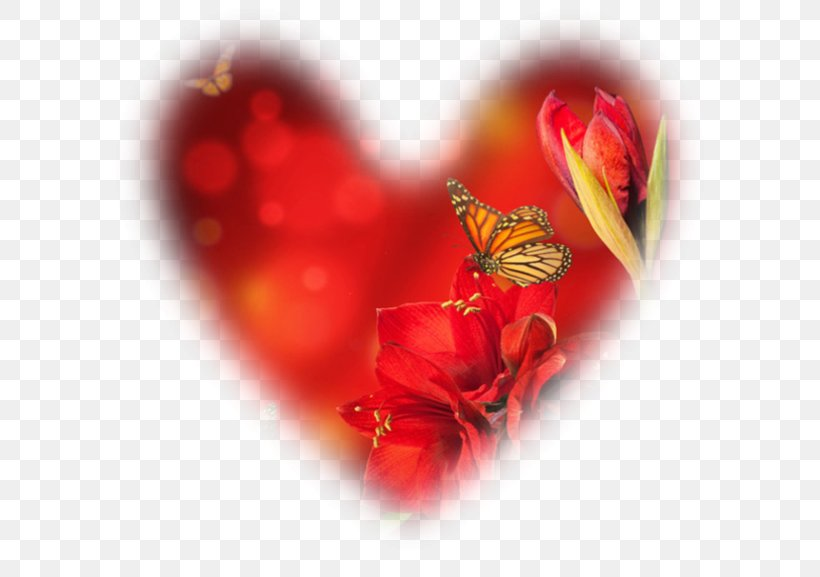 Desktop Wallpaper Valentine S Day Photography Png 600x577px Photography Adoption Butterfly Close Up Computer Download Free