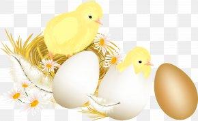 Easter - Easter Bunny Chicken Easter Egg Clip Art PNG