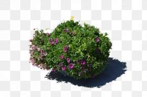 Flower Pot - Flowerpot Plant Stock Photography PNG