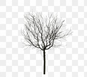 Animated Mangrove Forest - Twig Animation Computer Graphics Tree PNG
