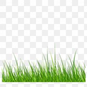 Green Grass - Samsung Galaxy S6 Grass Download PNG