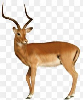 Cartoon Animal Deer - Deer Animal Dog Clip Art PNG
