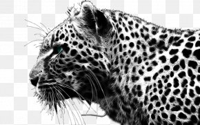 Cheetah - Leopard Cheetah Black Panther Lion Wallpaper PNG