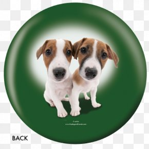 Russell Terrier - Jack Russell Terrier English Foxhound Dog Breed Parson Russell Terrier Tenterfield Terrier PNG