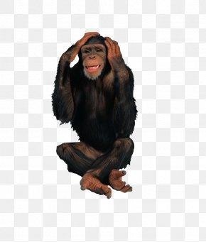Black Gorilla - Primate Chimpanzee Gorilla Ape Monkey PNG
