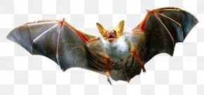 Bat - Bat Download PNG