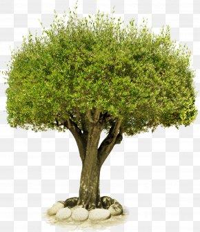 Tree - Download Tree Clip Art PNG