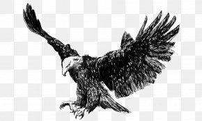 Flying Eagles - Bald Eagle Golden Eagle Steppe Eagle Illustration PNG