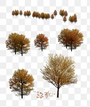 Autumn Tree - Tree 3D Modeling Autumn PNG