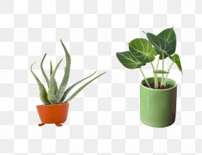 Potted G - Flowerpot Bonsai Icon PNG