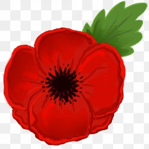 Red Poppies - Remembrance Poppy Armistice Day Clip Art PNG