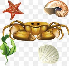 Screw Coral Crab Shells Seashells - Crab Euclidean Vector Seashell PNG